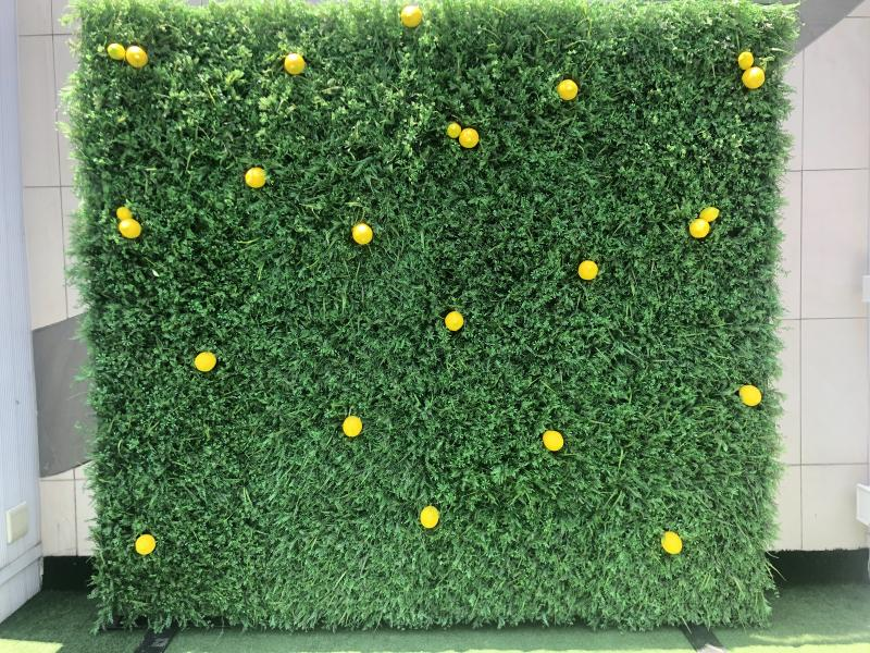 hedge-wall-with-lemons