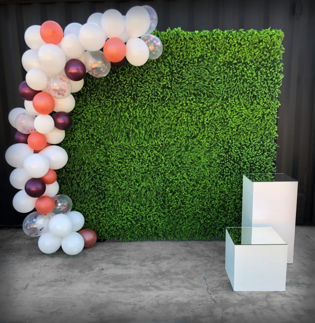 hedge-wall-with-balloons-and-plinths